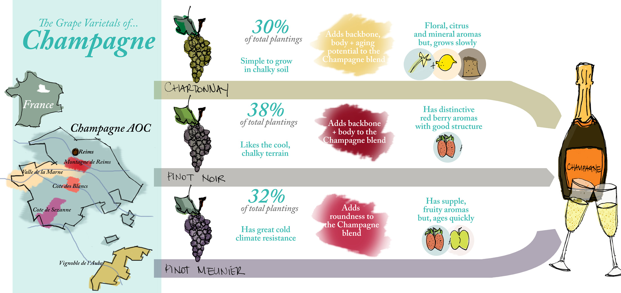 infographic-grapes-of-champagne